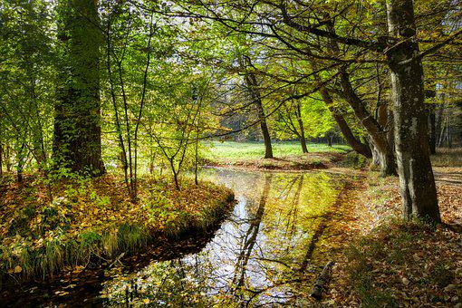 Forest, Bach, Water, Nature, Landscape, Creek, River