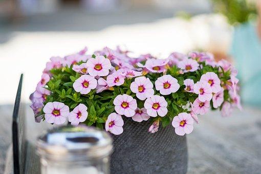 Flowers, Decoration, Table, Summer, Deco, Romantic