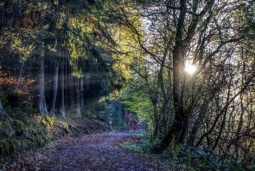 Jog, Run, Sport, Endurance, Movement, Sun, Rays, Sunset