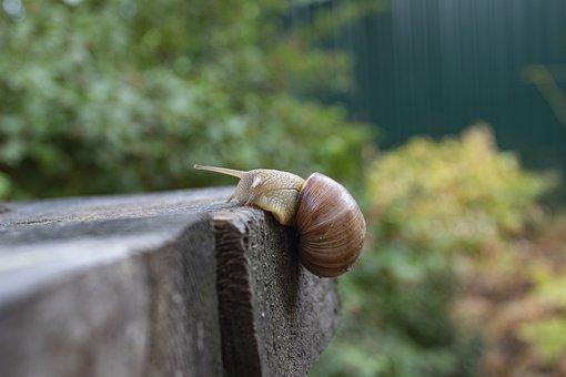 Snail, Creeps, Slimy, Macro, Slug, Slow, An Effort