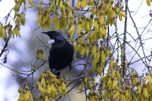 Bird, Flowers, Tree, Nature, Garden, Colorful, Spring