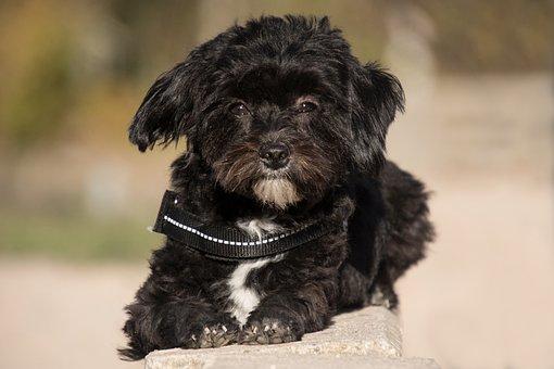 Dog, Animal, Hybrid, Black, Concerns, Sweet, Stone