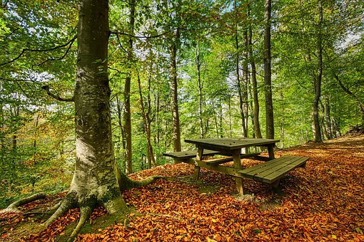 Forest, Bank, Table, Wood, Leaves, Autumn, Landscape