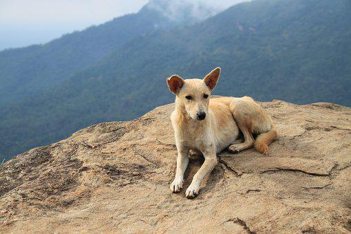 Dog, Mountains, Travel, Sri Lanka, Little Adam Peak