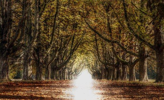 Avenue, Trees, Away, Nature, Autumn, Mood, Light