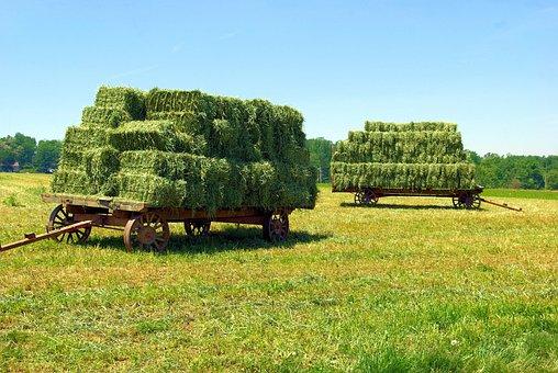 Amish Hay Wagons, Hay, Bales, Wagon, Summer, Field