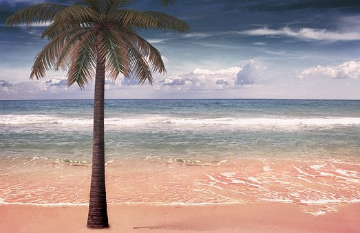 Sea, Palm, Sand, Beach, Wave, Wind, Blue, Tropical