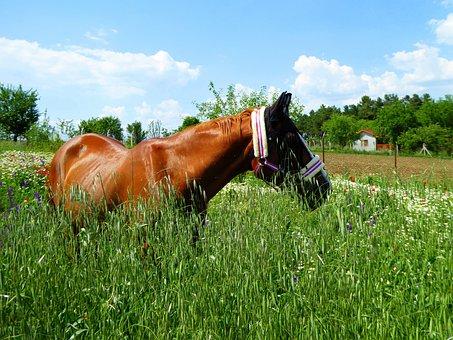 Horse, Wiesem Idyll, Landscape, Meadow, Paddock, Summer