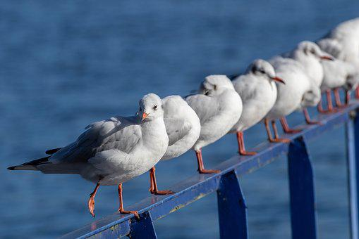 Seagull, Bird, Wasserfogel, Flying, Animal, Wing