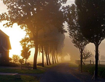 Fog, Ground Fog, Autumn, Sun, Avenue, Birch, Rural