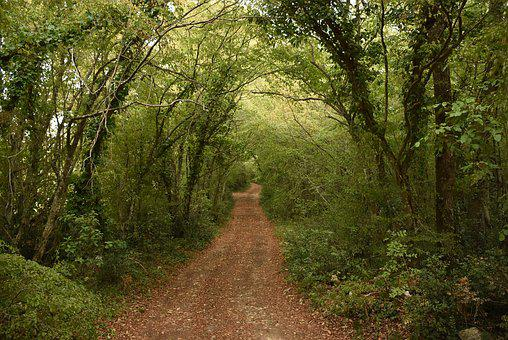 Trees, Away, Gravel Road, Forest Path, Avenue, Path