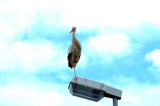 Stork, Bird, Storks, Birds, Animals, Fly, White Stork