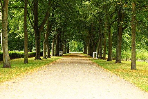 Avenue, Park, Ludwigslust-parchim, Castle Park