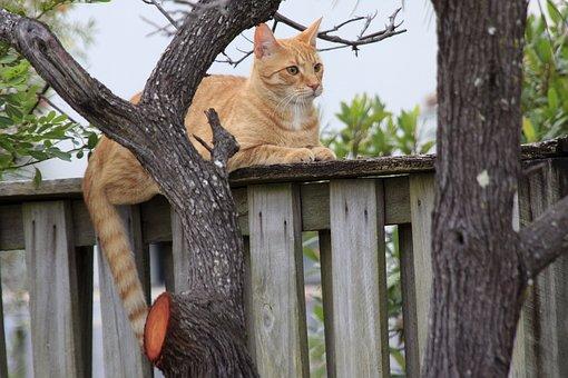 Cat, Homeless, Fall, Outdoor, Breed, Natural, Mammal