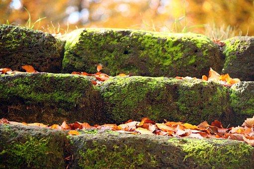 Gradually, Stone, Stairs, Moss, Feilenmoos