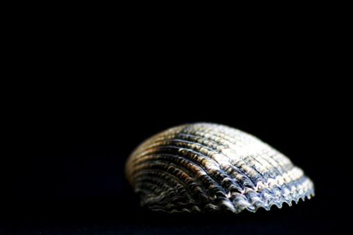 Shell, Close, Water Creature, Sea Animals, Flotsam