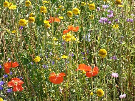 Flower Meadow, Colorful, Sun Hat, Poppy Flower