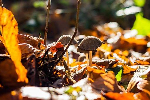 Mushrooms, Forest, Mushroom Picking, Autumn, Nature