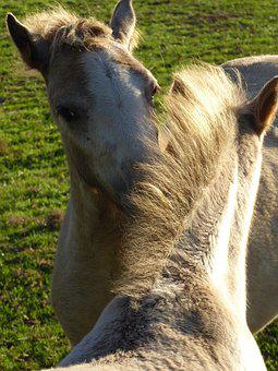 Welsh Ponies, Friendship, Love For Animals