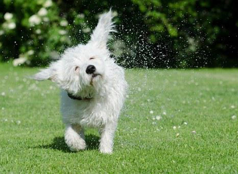 Dog Shakes Itself, Funny, Drop Of Water