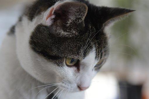 Cat, Looks, Eye, Fur, White, Look Under The