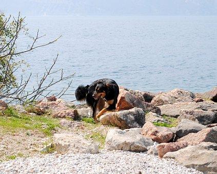 Cindy, Mixed Breed Dog, Garda, Bad Day, Italy
