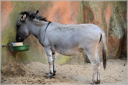 Donkey, Mule, Ass, Animal, Mammal, Rural, Funny