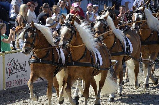 Haflinger, Pony, Fuchs, Mane, Horse, Mood