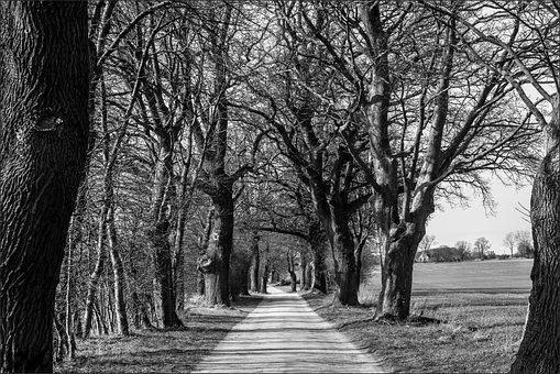 Avenue, Mecklenburg Western Pomerania, Branches, Nature