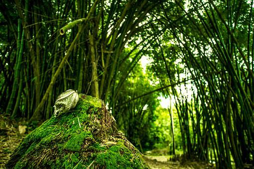 Forest, Green, Trees, Bamboo, Nature, Foam, Forests