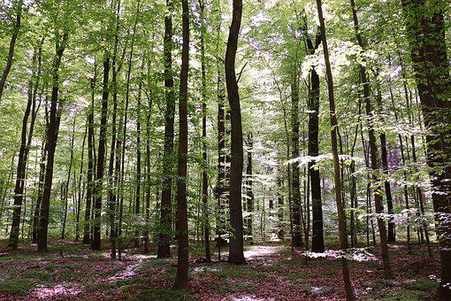 Forest, Beech Wood, Trees, Nature, Book, Strains
