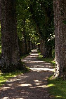 Away, Tree Lined Avenue, Avenue, Trees, Shady, Nature