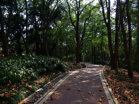 Mountains, Quiet, Tree-lined Path, Path, Forest
