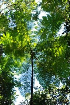 Rain Forest Canopy, Round Plant Swirl, Fronds