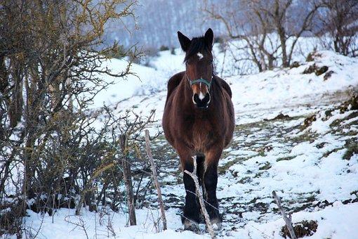 Horse, Riding, Snow, Winter, Riding School, Pony, Mount