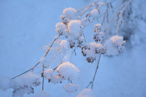 Snow, Branch, Cold, Nature, Tree, Winter Forest