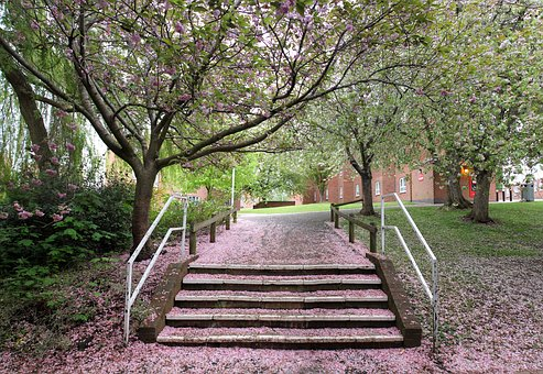 Cherry Blossom, Petals, Outdoors, Pink, Tree, Stairs