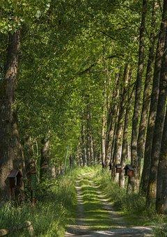 Away, Way Of The Cross, Avenue, Trees, Mood, Shady