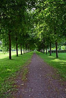 Park, Avenue, Walk, Trees, Tree Lined Avenue, Green