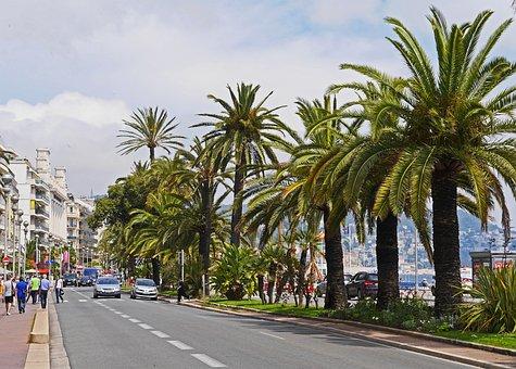 Nice, Boulevard, Beach Promenade, Vieux, Palm Trees