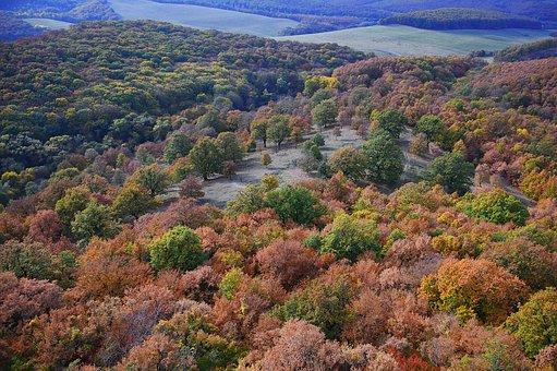 Landscape, Autumn, Autumn Landscape, Color