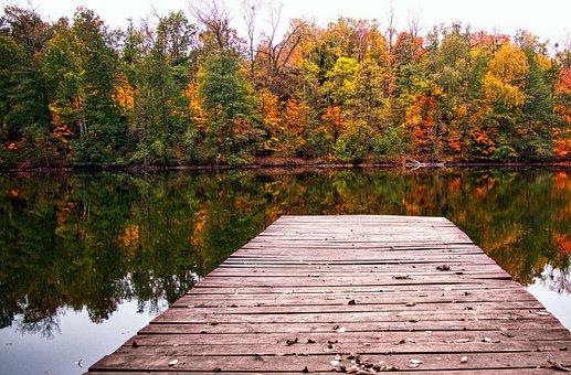 Autumn, Color, Colored, Foliage, Yellow, Leaf, Season