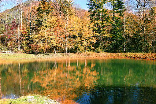 Fall, Trees, Autumn, Leaves, Forest, Season, Pond, Lake