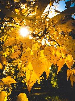 Day S, Foliage, Autumn, Nature, Wood, Background