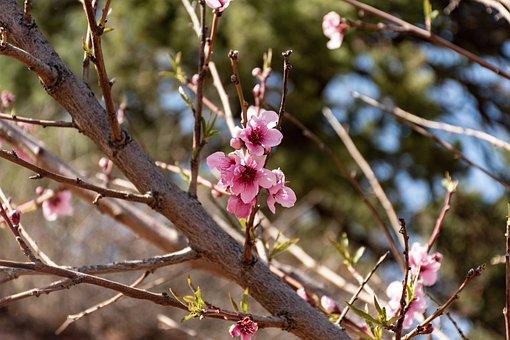 Tree, Blossom, Flower, Blooming, Tree Limb, Floral