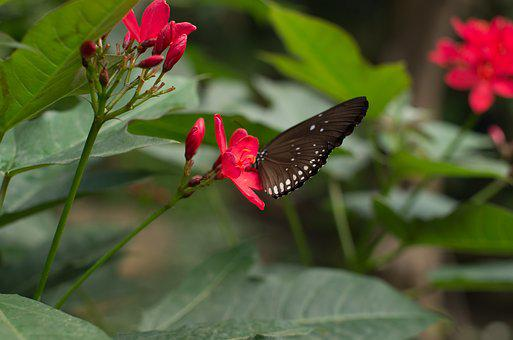 Butterfly, Flower, Insects, Nature, Red, Wings