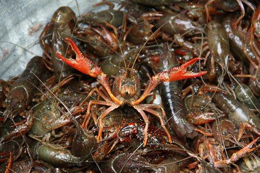Crawfish, Boil, Crayfish