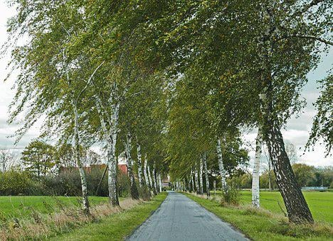Herbstwind, Birch Avenue, Bauerschaft, Emerge