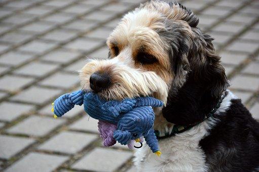 Dog, Animal, Pet, Hybrid, Mixed Breed Dog, Male