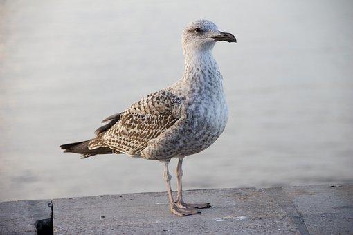 Bird, Cormorant, Fauna, Flying, Nature, Landscape, Pen
